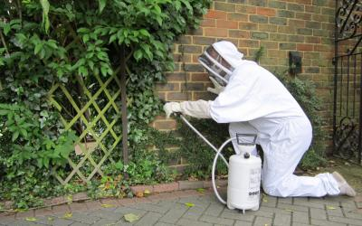 treating a wasps nest