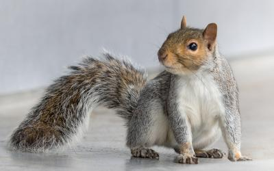 pest control west sussex - squirrel control