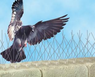 domestic bird control in sussex