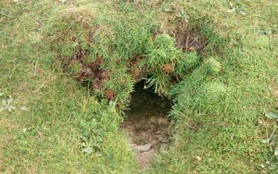 rabbit pest control in Sussex