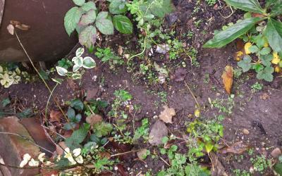rat run in garden